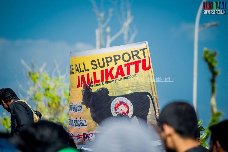 pictures-protest-jallikattu-marina-beach-photos-0002.jpg